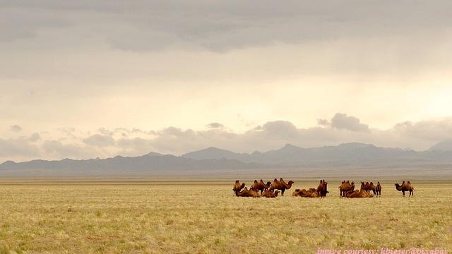 Mangolia Desert Stock Valuation